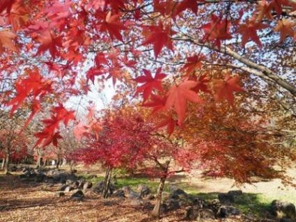 1青葉の森公園