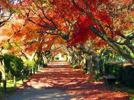 5小石川植物園