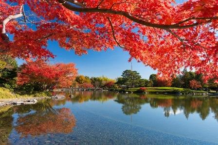 8国営昭和記念公園