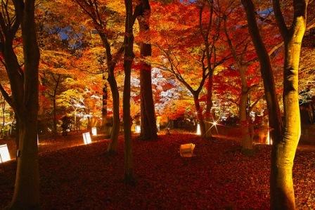 8国営武蔵丘陵森林公園