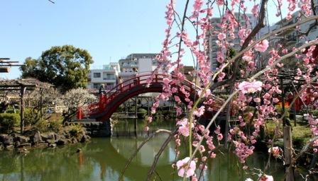 3亀戸天神社