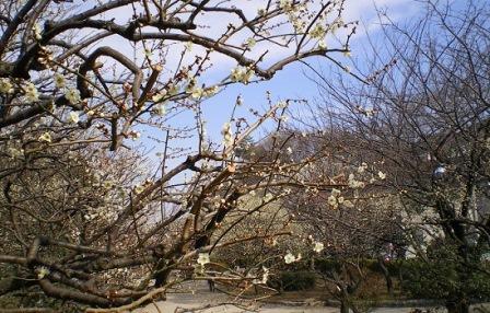 5赤塚溜池公園