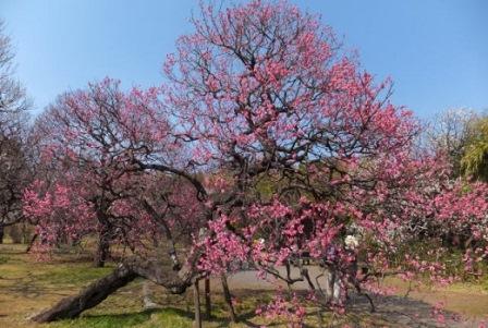 8都立神代植物公園