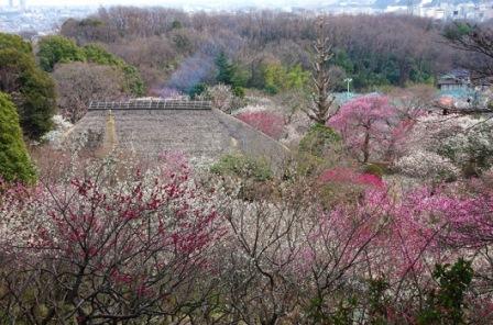 9京王百草園