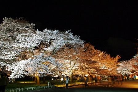 10京都府立植物園