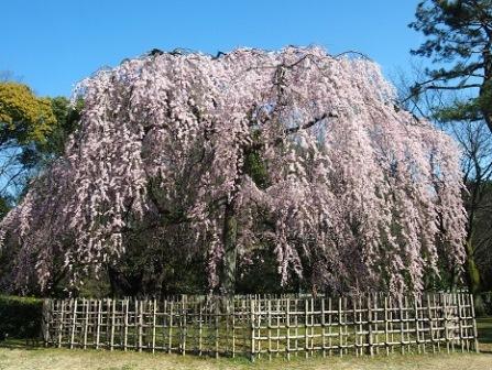 4京都御苑