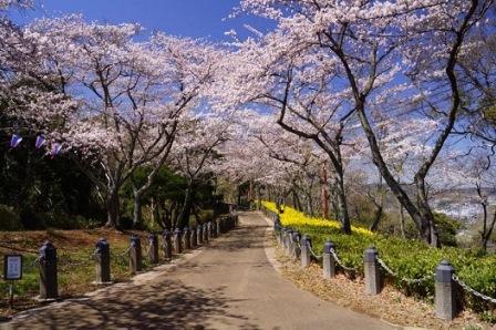 5衣笠山公園