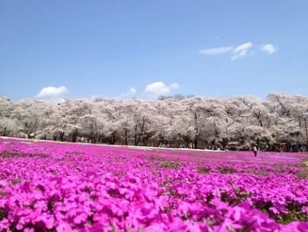 6-2みやぎ千本桜の森
