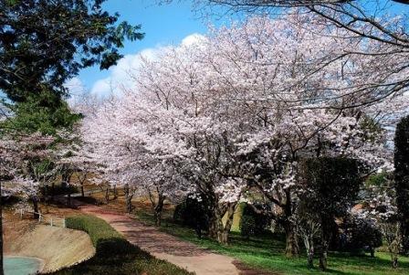 9磯部桜川公園